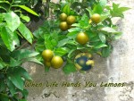 Lemons - When Life Hands You Lemons ( for web)