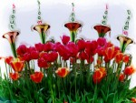 Tulips and Trumpets