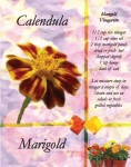 marigold front and back