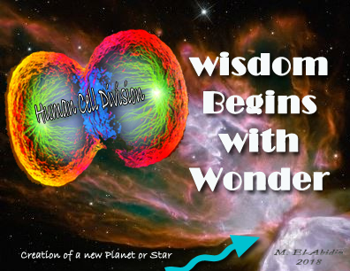 Wisdome Begins with Wonder